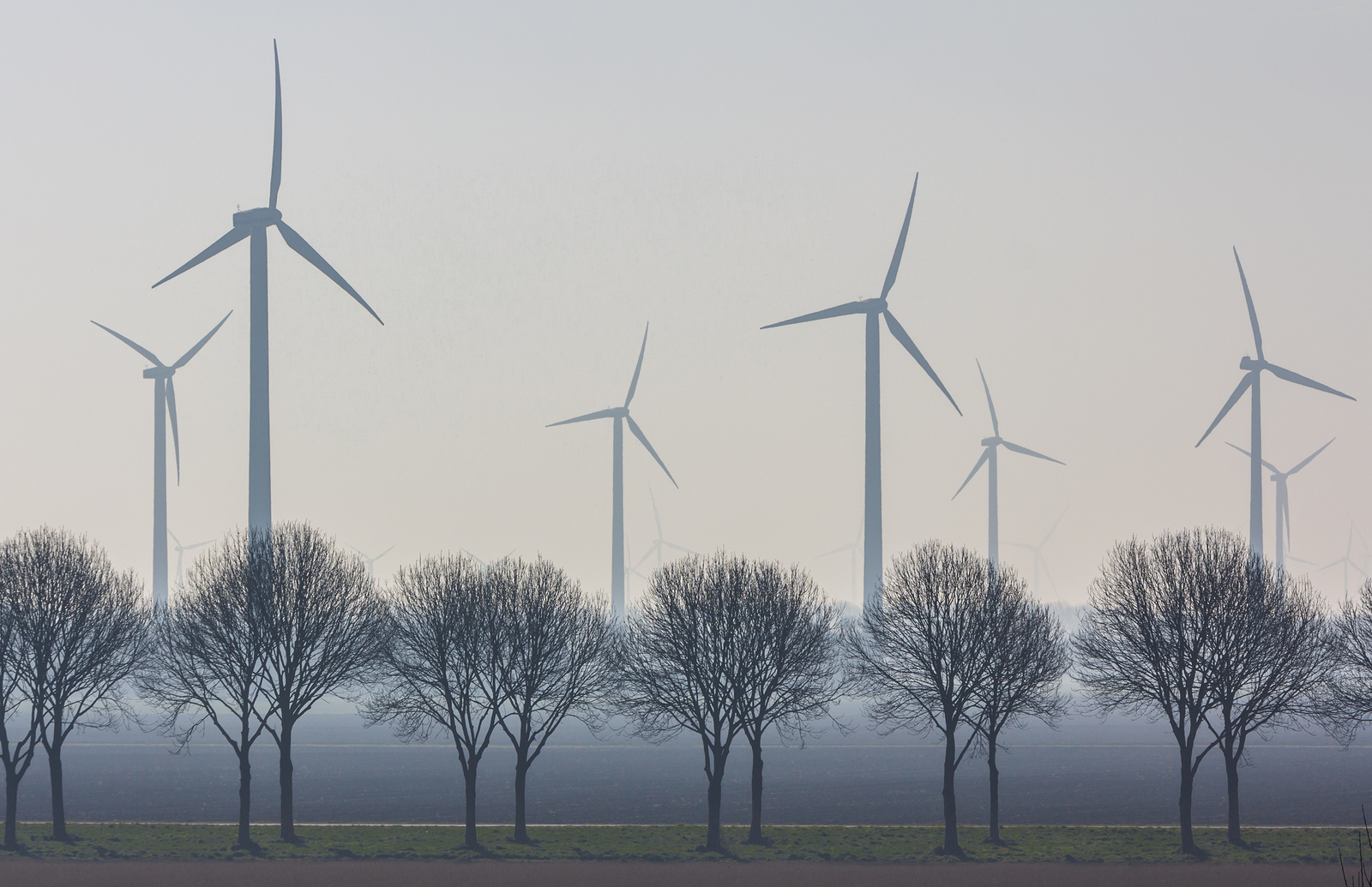Line of trees with Windmills in bakground