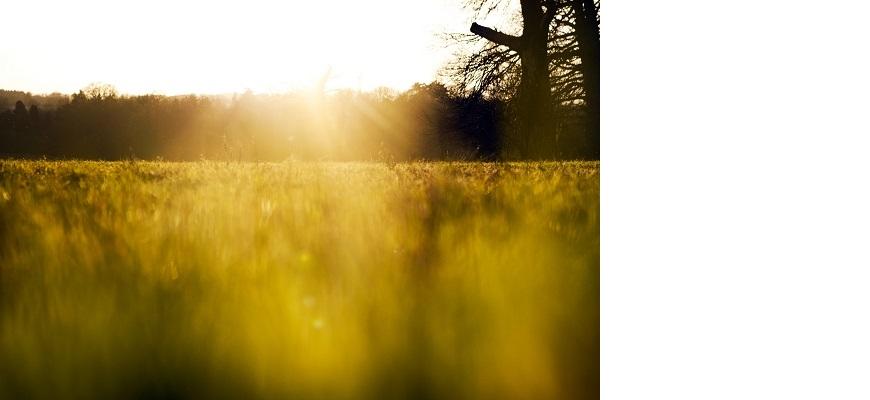 Sun shining on a field